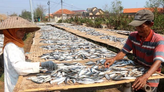 Geliat Produksi Ikan Asin Lesu di Musim Penghujan - Sampang