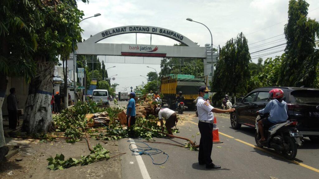Antisipasi Cuaca Ekstrem, Forum LLAJ Sampang Tebang Pohon Rawan Tumbang