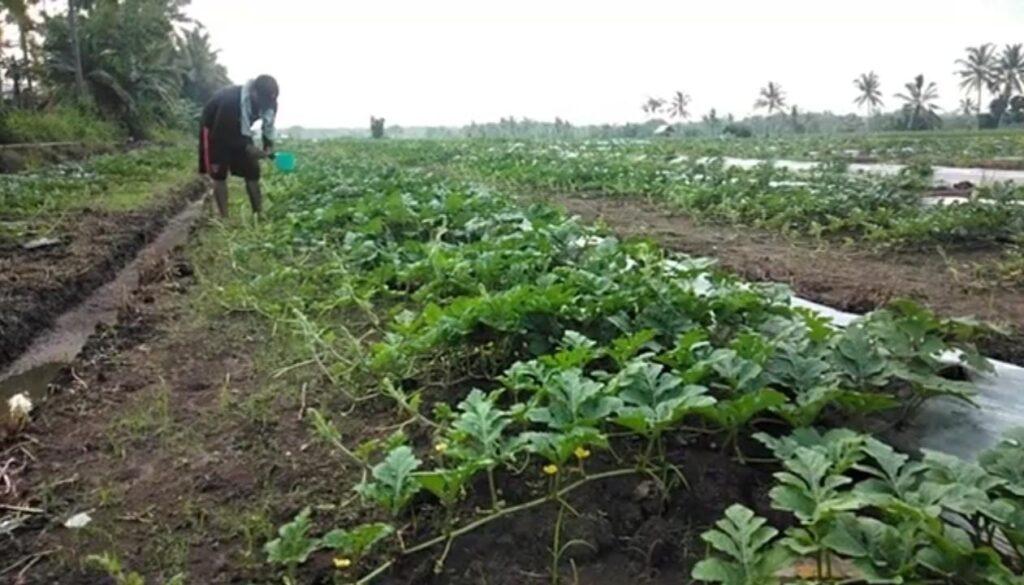 Tahun 2021, Disperta Sampang Priototaskan Pengembangan Agro Wisata
