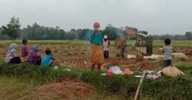 Harga Gabah di Sampang Turun Menjelang Panen Raya