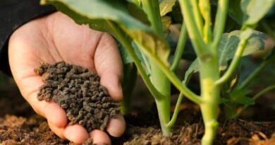 Dinas Pertanian Sampang Dorong Penggunaan Pupuk Organik
