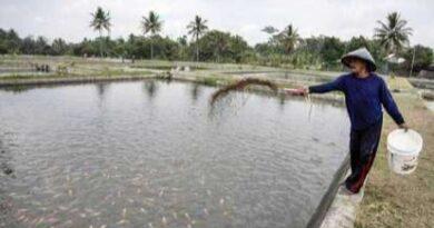 Potensi Budidaya Ikan Cukup Menjanjikan di Sampang