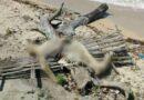 Geger ! Penemuan Mayat di Pesisir Mandangin, Polres Sampang Tunggu Hasil Visum