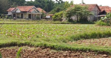 Hapus Bantuan Pembibitan Tembakau, Dinas Pertanian Fokus Pengadaan Alsintan