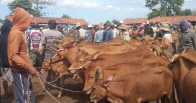 Pasar Sapi Blega Bangkalan Tetap Buka Saat PPKM Darurat, Cek Syarat dan Harganya !