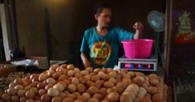 Harga Telur Ayam Turun di Pasaran, Ini Sebab Utamanya !
